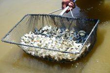 Emater apoia ação para fortalecer piscicultura no Norte paranaense