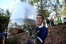 Codevasf marca 515 anos de descoberta do São Francisco com plantios e peixamentos