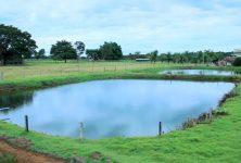 Curso orientará piscicultores sobre criação em viveiros escavados