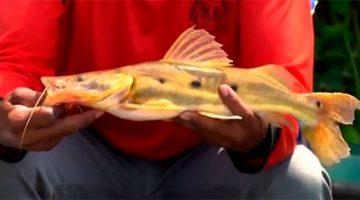 No Pantanal, diversidade de peixes faz a alegria dos pescadores