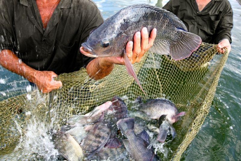 Consumo de peixes pode ajudar a aliviar artrite reumatoide, diz estudo
