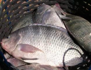 Sebrae realiza oficina de gastronomia à base de peixes