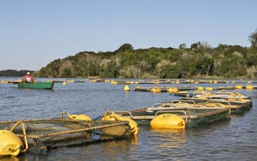Sebrae realiza Encontro de Oportunidades da piscicultura de Rondônia