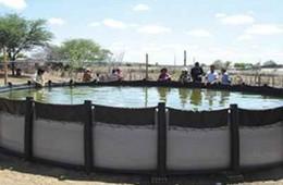 Tecnologia: Tilápia em água salobra