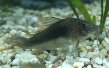 Sebrae MT realiza Feira Nacional e Seminário Técnico de Peixes Nativos de Água Doce, na próxima semana
