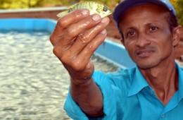 Fotógrafo usa piscina para salvar peixes 'encalhados' no Rio Atibaia