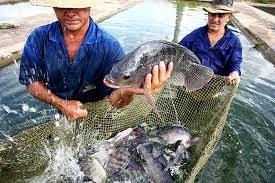 Companhia apresenta investimentos em aquicultura e pesca