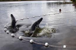 Sebrae apresenta estudo sobre piscicultura e perspectivas do mercado