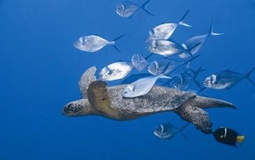 Pesquisa traça comportamento de peixes e invertebrados aquáticos