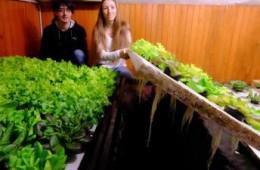 Produção caseira de peixes e hortaliças se desenvolve na Europa