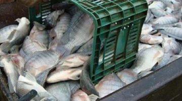 Bahia Pesca já distribuiu 7,5 milhões de alevinos em 2015
