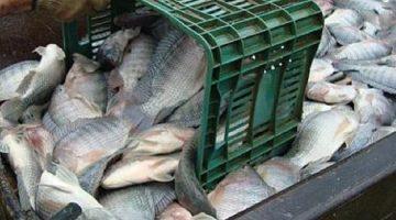 Gestão de Pescado é tema de novo curso do Pecege