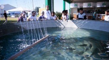 Campo Futuro levanta custos na criação em tanque de camarão e tilápia na região nordeste