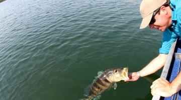 Pesca esportiva ganhará regras modernas em Serra da Mesa