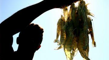 Apenas 10% dos pescadores do PA e MA foram recadastrados