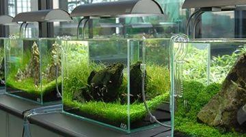 Resolução do CFMV regulamenta RT em estabelecimentos que cultivam ou mantêm organismos aquáticos