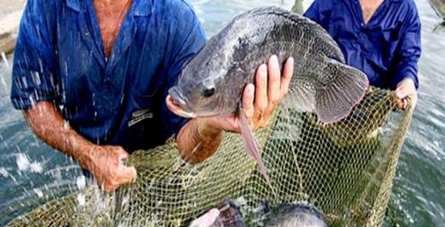 Epagri abre inscrições para cursos gratuitos de piscicultura