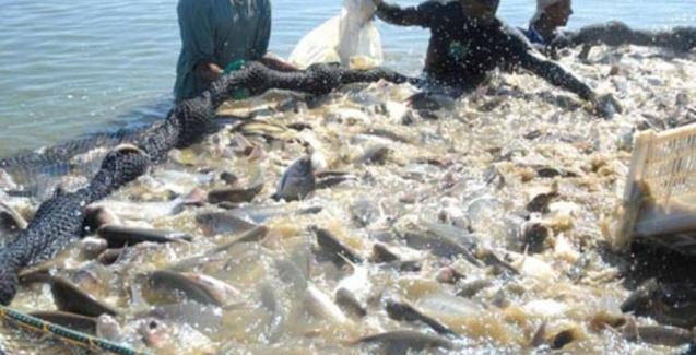 Produção de pescado aumenta em Mato Grosso