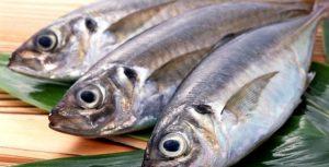 Pescado tem potencial para se tornar a principal proteína, no futuro