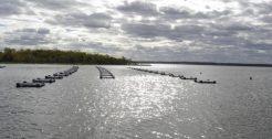 Prefeitura de Passos Maia elabora programa de incentivo à piscicultura