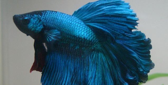 Aquacultura marca presença na 57ª Exposição Estadual Agropecuária