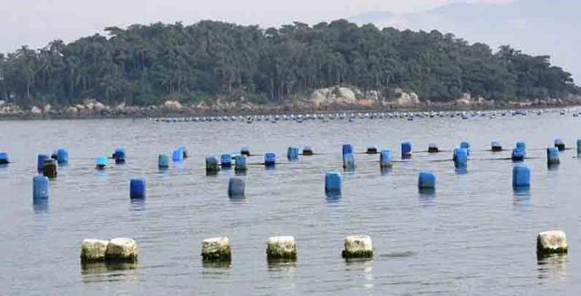 Incentivo à maricultura em Santa Catarina