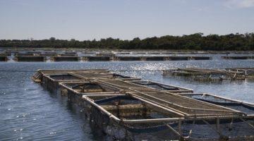 Paraná, Rondônia e São Paulo destacam-se na produção de peixes no Brasil