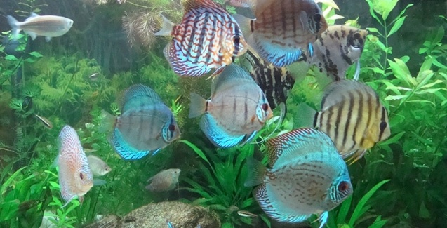 2º Simpósio de Peixes Ornamentais de Minas Gerais