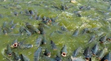 De olho na piscicultura