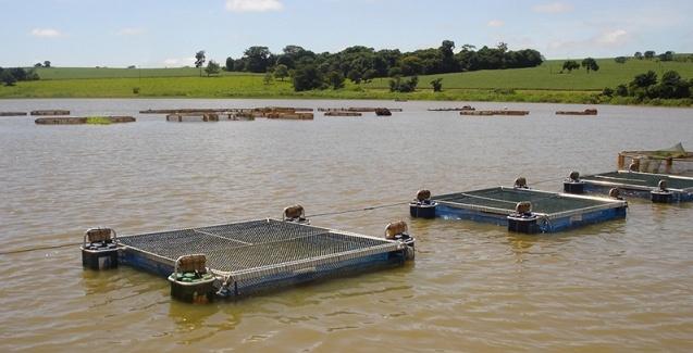 Minas Gerais avança no ranking nacional de criação de peixes