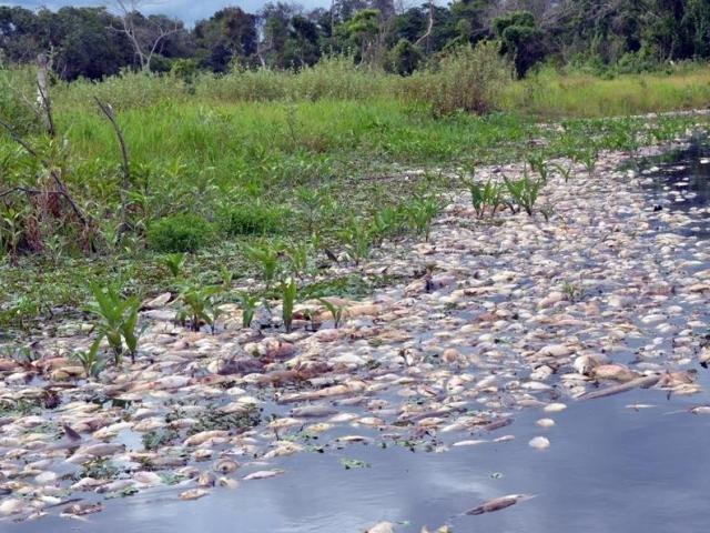 Decoada repentina no Pantanal mata peixes e alerta para pesca predatória