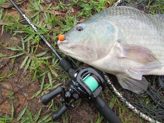 Técnicas para pesca de tilápia em pesqueiros