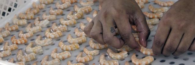 Guerra do camarão volta à esfera política