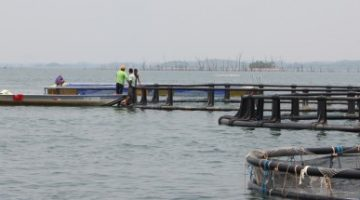 Consulta sobre atividades potencialmente poluidoras do Ibama acaba em 31 de julho