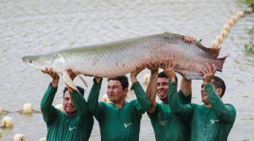"""""""A piscicultura é a salvação dos médios e pequenos"""", afirma produtor"""