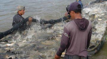 Ruraltins inicia atividades do censo da piscicultura no Estado