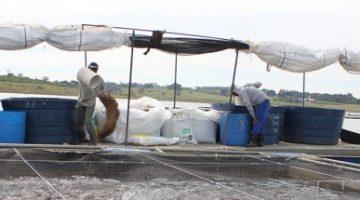 Produção de ração para aquicultura cai 5% no primeiro semestre, diz Sindirações