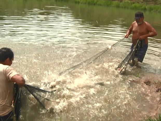 Cartilha deve ajudar na criação de peixe (Foto: Reprodução/TV Tapajós)