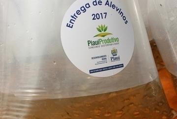 Estado já entregou mais de 1 milhão de alevinos para produção de peixes no Piauí