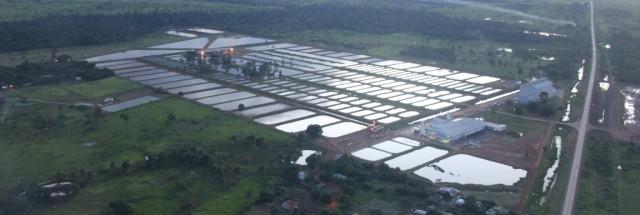PPM 2016: Sudeste cresce 43% em produção, mas Rondônia se consolida na liderança da piscicultura nacional