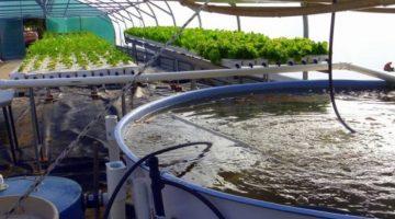Sistema de nutrição de peixes é tema de pesquisa