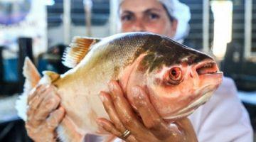 Idaron inicia emissão online da Guia de Trânsito Animal de peixes em RO