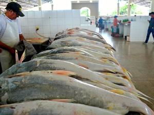Pescados de cativeiro serão inspecionados pela Diagro (Foto: Abinoan Santiago/G1)