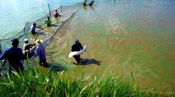 Mapa e setor privado querem simplificar licenciamento ambiental para aquicultura