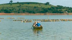 Piauí investe no desenvolvimento da piscicultura na região do semiárido