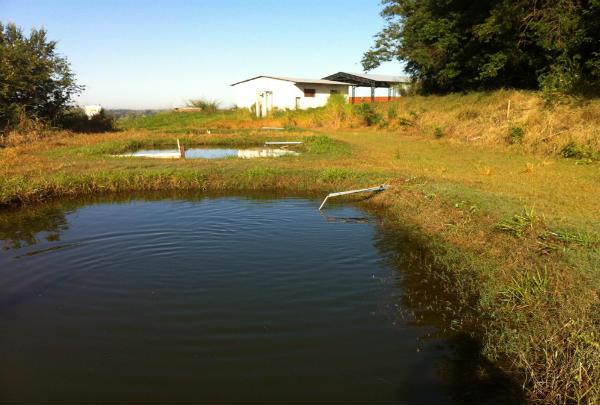 Piscicultura: 5 dicas para reduzir a perda de água em viveiros escavados