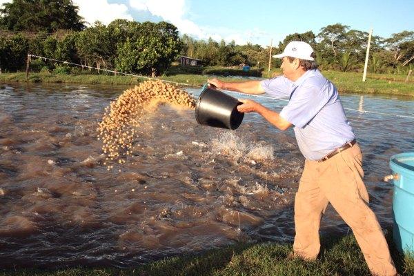 Colpani piscicultura produ o de alevinos alevinos de for Elaboracion de estanques para piscicultura