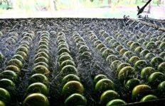 Produtores rurais do AM são premiados com Ordem de Mérito Agropecuário
