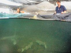 Ciência busca caminhos para suprir escassez de pescados no mar