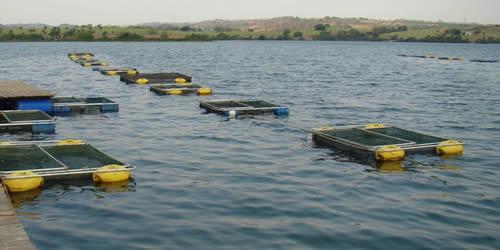 Sistemas de produ o na cadeia de aq icultura colpani for Manual de piscicultura tilapia